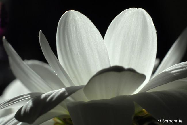 coeur-de-fleur