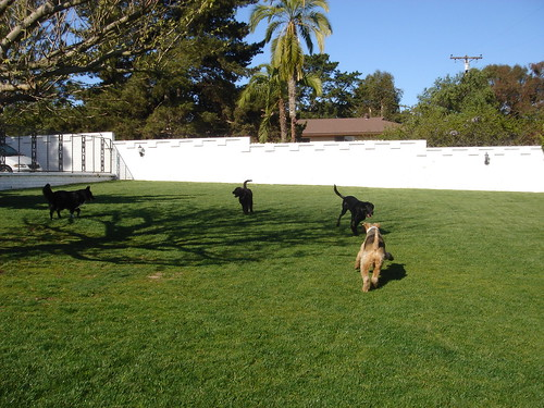 Alcala playtime in Dog Park