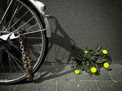 The bike and the flower (Jos Mecklenfeld) Tags: flower bike nokia cellphone dandelion groningen jos fiets bloem taraxacumofficinale paardenbloem mecklenfeld anawesomeshot aplusphoto