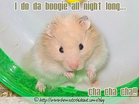 Hamster Cha Cha Cha
