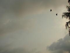 Birds in flight (dendapani) Tags: fireworks vishu shantanu