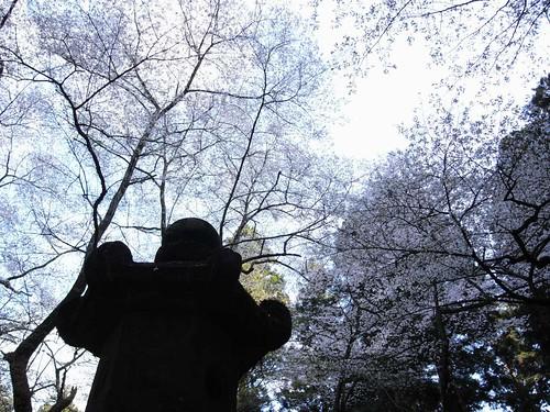 室生寺(桜)-06