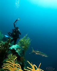 cudadvr8781pcw (gerb) Tags: blue sea fish topv111 coral nice topv555 topv333 underwater bubbles scuba 1224mmf4g topv777 diver d200 thumbsup cuda barracuda fins bonaire tvp aquatica pfo 3waychallenge 3wayicon 3w5 tu5 photofaceoffwinner pfogold