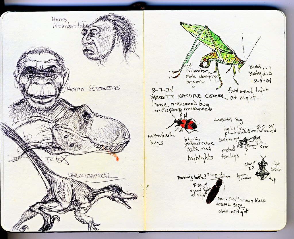 the world u0027s best photos of insect and moleskine flickr hive mind