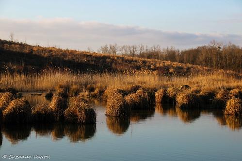 Réserve naturelle de la Motte, pour oiseaux migrateurs
