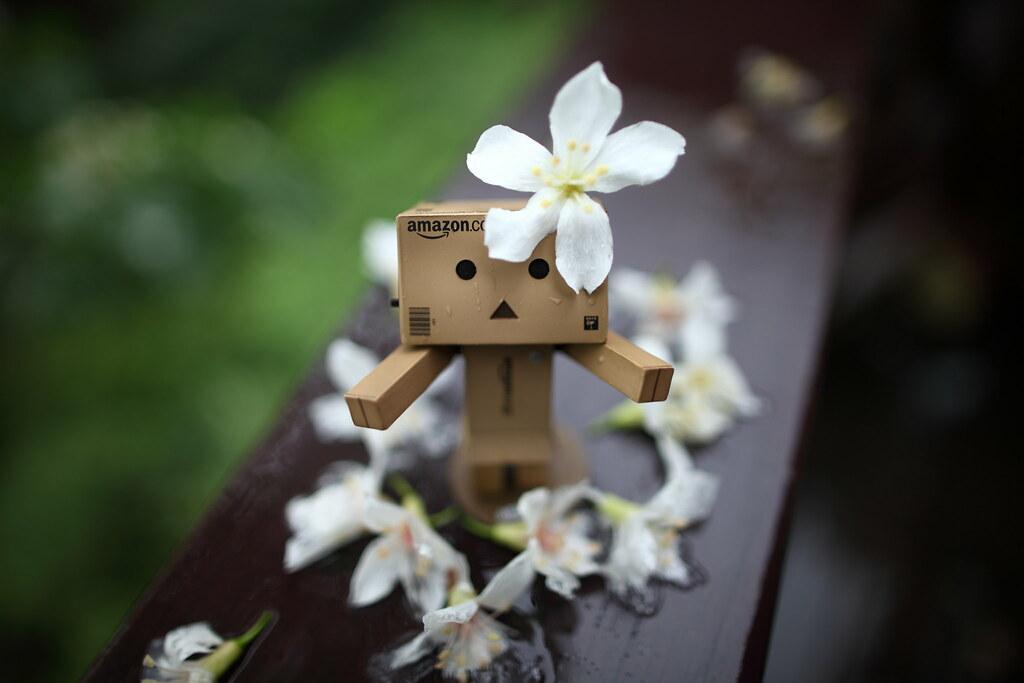 阿楞桐花祭