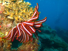 Pretty Feather Star