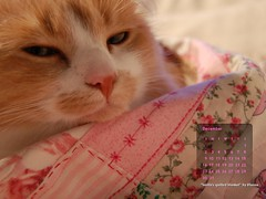 December cozy cat