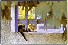 La siesta del gato... (MiguelFont) Tags: leica grecia gato patmos leicar9 ektachromee200 apomacroelmaritr100mmf28