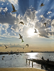 ascension (sadaiche (Peter Franc)) Tags: sky sun seagulls white playing beach water sunshine birds st canon pier bright band dramatic melbourne 500v50f sunrays ascension kilda intothesun 35faves weatherphotography 400d sadaiche