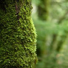 Moss Relief