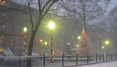 The Park at Night (icelight) Tags: park christmas snow boston night lights christmastree lamppost southend fallingsnow deccorations
