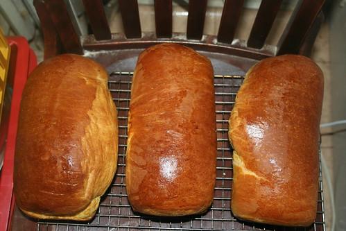butternut squash brioche