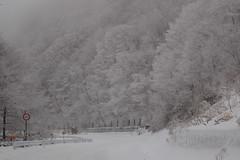 Wintry landscape (polarstar02) Tags: ice japan silver d50 landscape scenery hoarfrost nagano 35mmf2d softrime