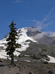Lone tree on Mount Hood (kyleddsn) Tags: ski glacier mounthood subalpine