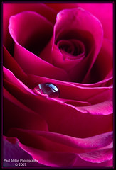 A droplet on a Rose (Paul Iddon) Tags: red flower macro nature rose bravo refraction bloom peopleschoice sigma105 iddon flickrsbest fantasticflower golddragon platinumphoto aplusphoto excapture themacrogroup bestroseshot betterthangood mailciler macroflowerlovers alemdagqualityonlyclub