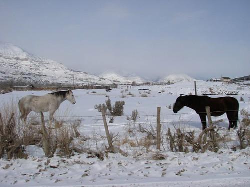 Frozen horses