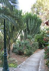 Euphorbias in Villefranche