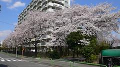 板橋区坂下3-21