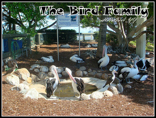 Seaworld: The Bird Family