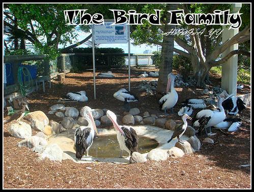 Seaworld: The Bird Family