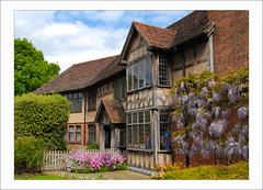 Town Centre (scuba_dooba) Tags: uk building garden 1224mm warwickshire wisteria stratforduponavon outstandingshots ashotadayorso scenicsnotjustlandscapes