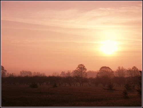 Apple Orchard Sunrise