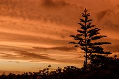 Waiinu: 8.2.2017 at 19:32h (m+m+t) Tags: dscf36911 mmt meredithbibersteindesign newzealand northisland taranaki waiinubeach coast sky evening sunset clouds silhouette trees fujixt1 fujixseries fujimirrorless 1855mm windy gale wild storm outdoors landscape