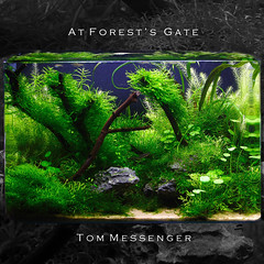 At Forest's Gate (TMPhotography) Tags: nature tom aquarium gate tank messenger forests aquascape planted at