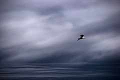 Volviendo a casa / Returning Home (Claudio.Ar) Tags: blue sky naturaleza santafe nature water argentina birds azul wow agua seagull sony aves 100v10f