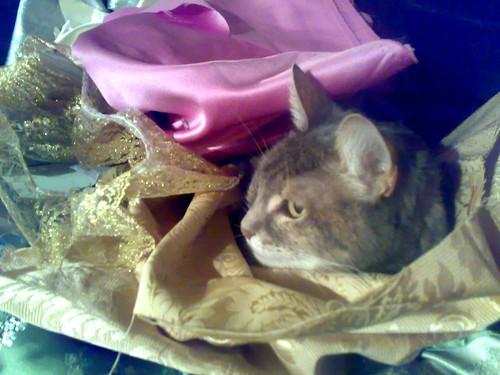Asia Likes Fabric