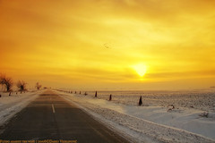 Flying against the wind (darkves) Tags: road sunset sun snow landscape fly duck wind blow sneg banat ravnica deliblato pejza koava darkoveselinovic