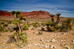 Red Rock Canyon - NV (Michael Pancier Photography) Tags: redrockcanyon red usa landscape sandstone desert lasvegas nevada nationalmonument fineartphotography naturephotography seor americansouthwest lasvegasnevada naturephotographer floridaphotographer michaelpancier michaelpancierphotography wwwmichaelpancierphotographycom seorcohiba