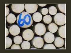 0340 Holz Stmme Beige Zahl 60 blau (helvetia) Tags: wood blue forest schweiz switzerland beige suisse suiza logs number pile blau svizzera holz 60 stmme zahl felixschlpfer