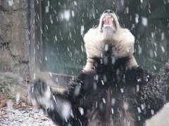 Tai's snow aria! 058 (by RoxandaBear)