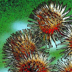 Burdock (tina negus) Tags: winter painterly artistic expression digitalart manipulation burdock specialeffects seedheads artisticexpression coolestphotographers