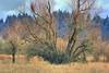 big winter tree adjusted 2 (jodi_tripp) Tags: winter tree grass dead wildlife refuge ridgefield joditripp winter08 wwwjoditrippcom photographybyjodtripp