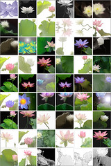Bahman Farzad Fine Art Collection of Lotus Flower images / pics on Flickr.com (Bahman Farzad) Tags: china pink flowers india inspiration plant flower macro eye water yoga tattoo thailand design leaf petals truth colorful cambodia peace lily lotus blossom designer relaxing calming award peaceful teacher exotic national lilly sacred meditation unusual therapy budha elegant inspirational spiritual simple hindu author soulful heavenly farzad buda tatto winning peacefulness devine indias lotusflower therapist bahman lotuspetal lotuspetals nationalflowerindia nationalflowerofindia bahmanfarzad indiasnationalflower soulfulflower lotusflowerpetals lotusflowerpetal