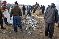 Fishing (Aria Mehr) Tags: fish persian fishing iran persia iranian aria rasht