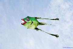 Aquiloni.... (Monica M. ®) Tags: sky italy kite colors nikon italia mare wind volo cielo colori spiaggia vento gioco romagna cervia aquiloni volare vele d80 eventidafotografare monicamongelli