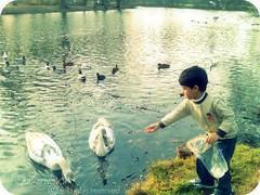 Boy with ducks in Germany (qatari star) Tags: boy lake germany ducks hamad  goldstaraward