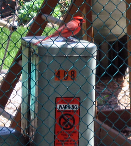 CardinalOnCableBox