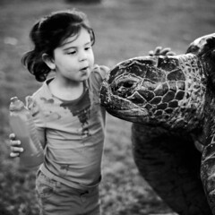 Hello turtle (Kerrie McSnap) Tags: portrait blackandwhite bw girl kids children square nikon child turtle thestrand townsville d60