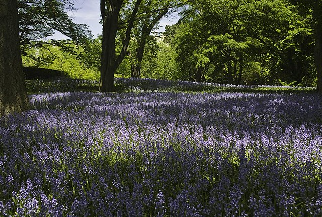 Ben Miflin's winning shot of Bluebell Wood
