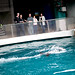 Faith Middleton @ Mystic Aquarium