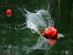 0706 om5 71017 c (thethi: more 1 million vws tks a lot :-)) Tags: water ball spring movement eau belgium belgique splash objet printemps mouvement boule wallonie balle ptanque bestof2007 96faves setwater setvosfavorites setinclassables mygearandmediamond setobjets20062007 ruby10 ruby5 ruby15 setjuin setmorethan25forexplore20062007 lookfinal vigilantphotographersunite vpu2