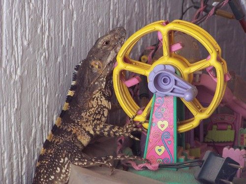 La iguana con complejo de godzilla