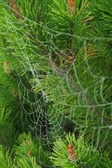 IMG_9228.JPG (resistealeau) Tags: fog spiderweb roadtrip saultstemarie