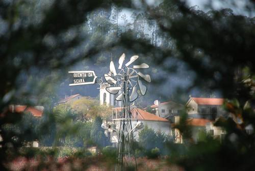 Palmeira de Faro 033