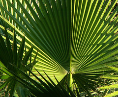 Palm Frond Composition